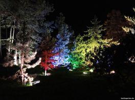 Bunt beleuchtete Bäume