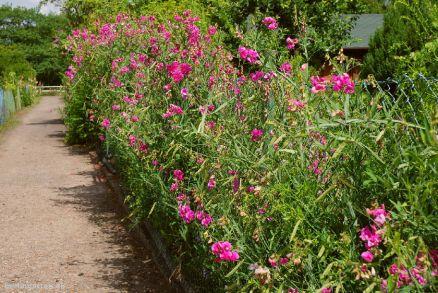 Blühende Gartenwege