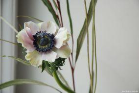 Blütenschönheit Anemone