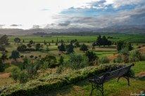 Blenheim, die Gegend in Marlborough, die den Weltruf Neuseelands als Weinnation begründet hat. Unbedingt probieren: den Sauvignon Blanc und fangfrische Clams (Venusmuscheln)