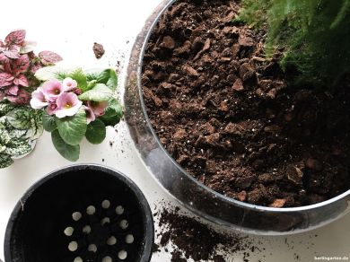 Blumen entweder im Topf einsetzen oder auspflanzen