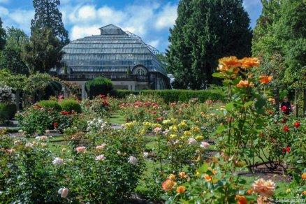 Ein erstes Appetitmach-Foto aus dem Botanischen Garten Christchurch muss sein