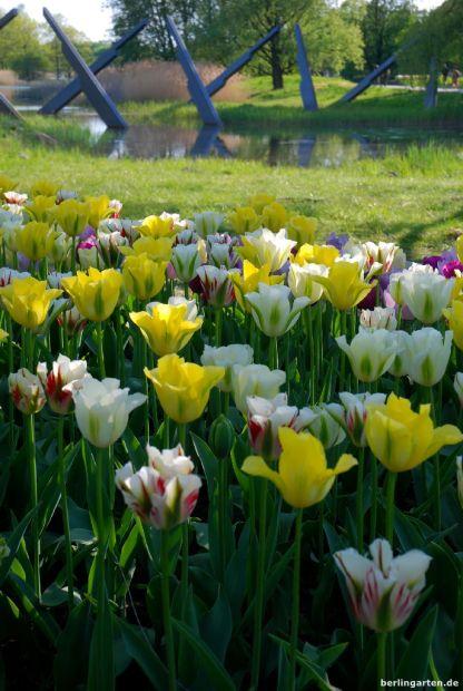Britzer Garten - zauberhafte Tulpen-Pflanzungen mit Blick über die Seen