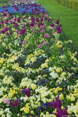 Bunte unterpflanzte Tulpenbeete