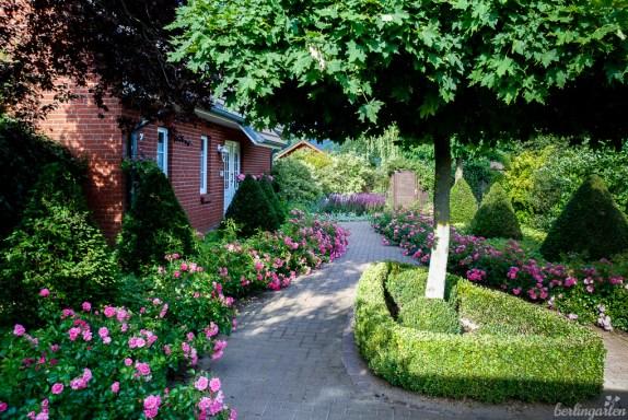 Der Eingangsbereich mit Rosen, Formschnitt, kugeligem Ahorn und der Pflasterung zeigt sofort an, um was für einen Gartenstil es sich bei Katrin handelt