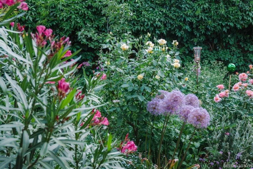 Üppiges Beet mit Oleander, Rosen, Zierlauch