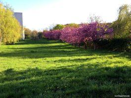 Die Cornelsenwiese im Mai