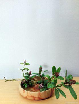 Mein fertiges Moribana in geliehener Schale