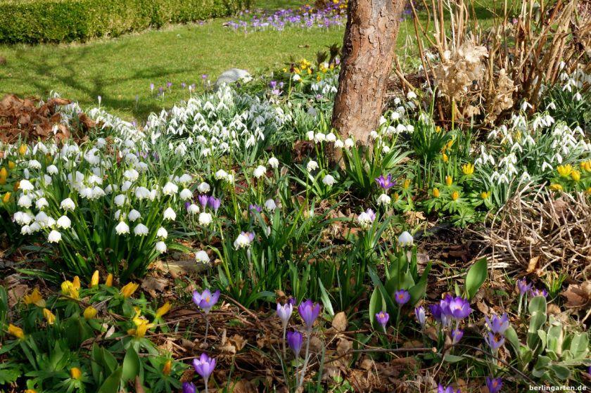 Immer erst einmal behutsam vorgehen und beobachten. Vielleicht wartet der Garten im nächsten Vorfrühling ja mit solchen Schätzen auf dich?