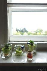 Gemüsezöglinge