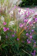 Herbstanemonen mit Gräsern und Astern