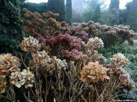 Hortensien im Herbst: immer noch schön