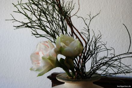 Ikebana mit Amaryllis