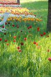 Der Britzer Garten besticht durch eine gelungene Mischung aus natürlichen und Show-Pflanzungen