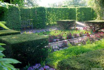 Dezente Tulpen-Verwendung im Eibengarten