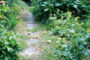 Junifall Klarapfel