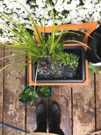 Kiesel Wasserpflanzen