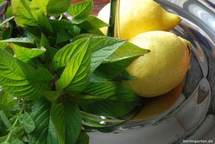 Kräuter und Zitrone