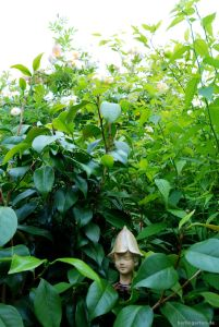 Glänzendes Grün: Leucantha im Sommer