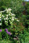 Ehrfürchtig Garten Tipps Design