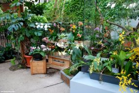 Orchideen-Präsentation