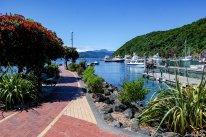"""In Picton legen die Fähren zur Nordinsel ab. Die rot blühenden Bäume sind die """"Weihnachtsbäume Neuseelands"""" die Pohutukawa (Metrosideros Excelsa)"""