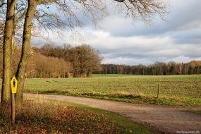 Raben in Brandenburg
