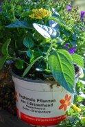Besonders robust und ans das jeweilige Klima angepasst sind regional gezogene Pflanzen