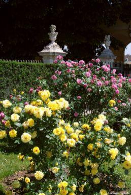 Riesige Rosensträucher
