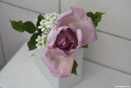 Es ist Juni, die Rosen blühen