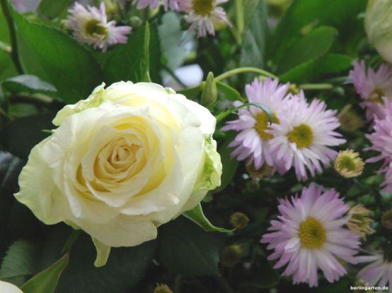 Rose Astern