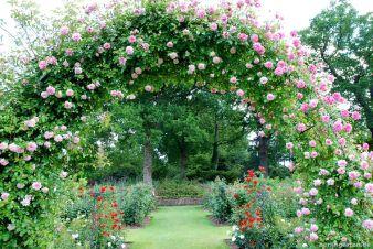 Rosenneuheiten-Garten