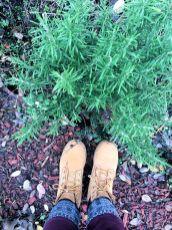 Rosmarin lässt sich lange im Garten ernten. Mit etwas Schutz übersteht er sogar oft unsere Winter