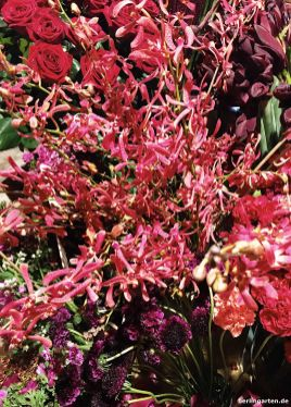 Blumen in Rottönen