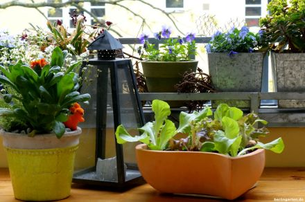 Salat auf Balkon