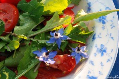 Salat aus dem Garten
