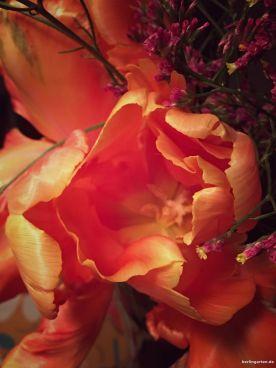 Seidige Textur der Blütenblätter