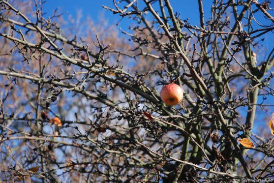 Sinnbild letzter Apfel