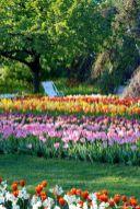 So stellt man sich Tulpen-Holland vor