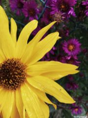Blüten-Kombination in gelb-violett
