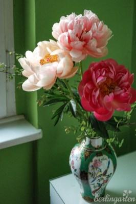 Alle drei Blütenfarben sind traumhaft