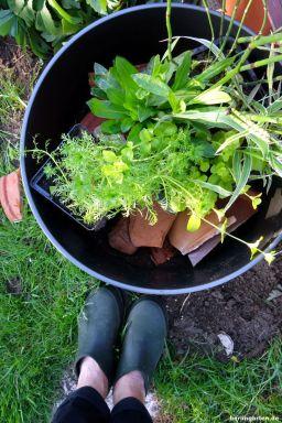 Teichpflanzen arrangiert