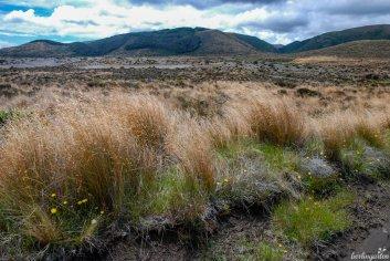 Ein besonderer Touristenmagnet ist der Tongariro National Park, ein UNSCO Weltnaturerbe. Leider waren die beeindruckenden Vulkane in Wolken