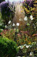 So schön kann es im Herbst noch blühen. Schön die weißen Anemonen