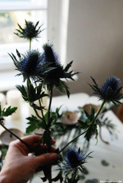 Tolles Blau: Distel Eryngium