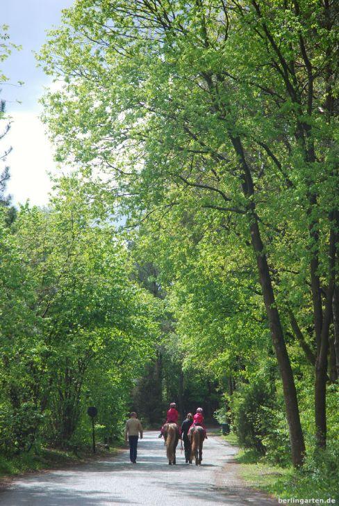 Zauberhafter Center Parcs Bispingen