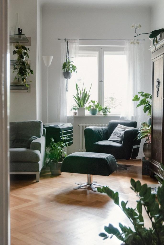 Leben mit Zimmerpflanzen verteilt im Raum