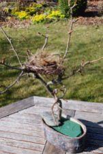 Zweig Nest