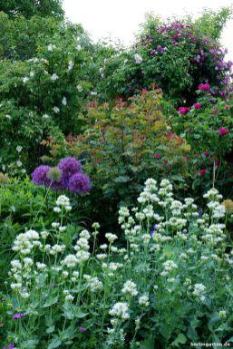 Spornblumen als Partner zu Rosen