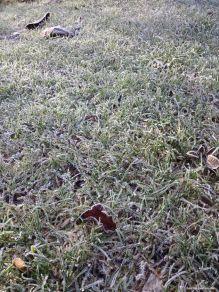 gefrorener Rasen